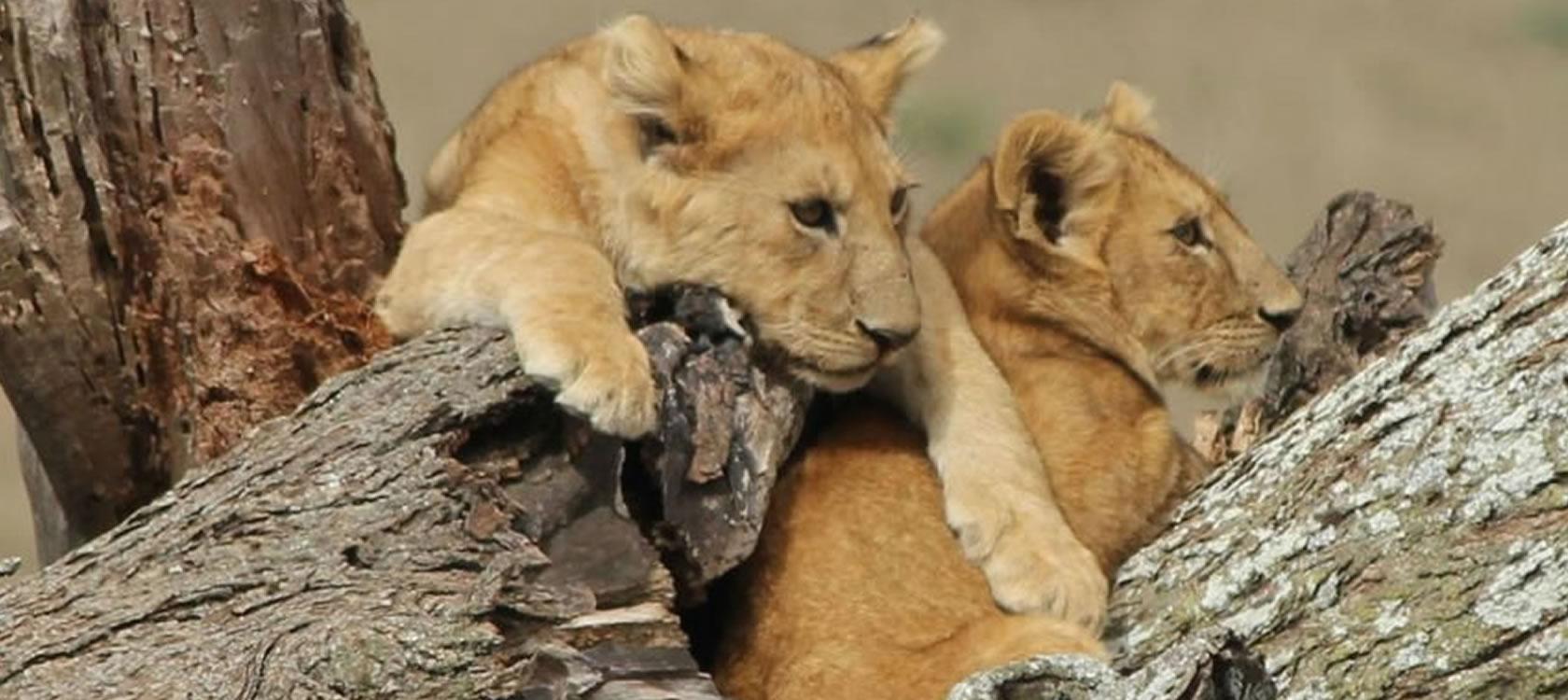 Serengeti & Ngorongoro